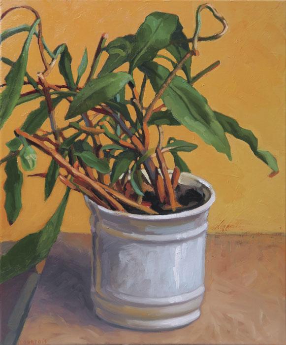 Pot blanc et plante verte sur fond jaune