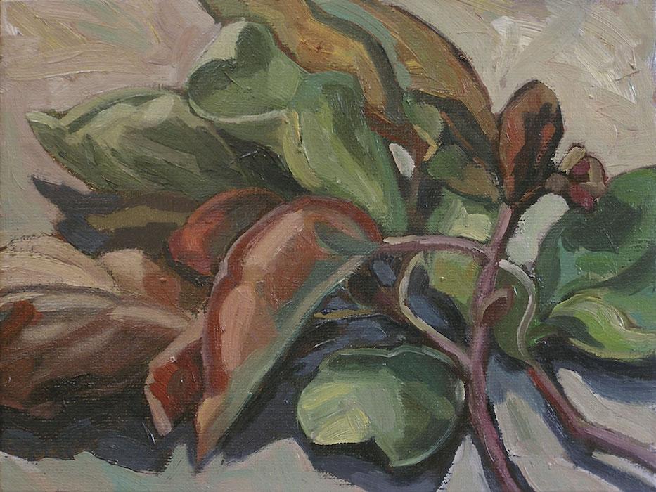 branche et feuilles de châtaignier