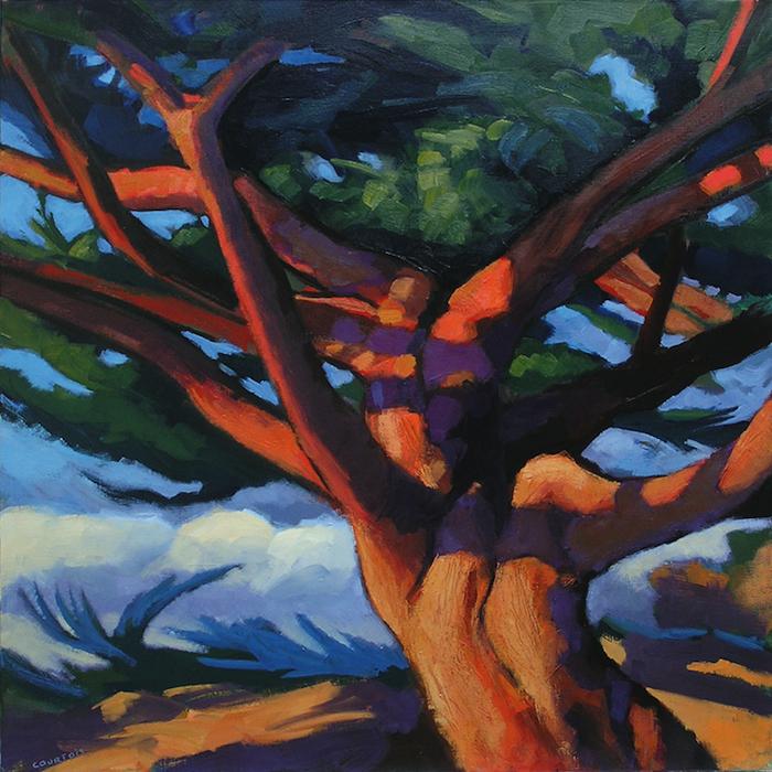 arbre thuya coloré en bord de mer