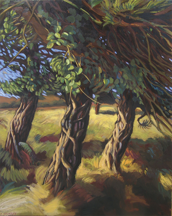 arbres et lierre au cap d'erquy